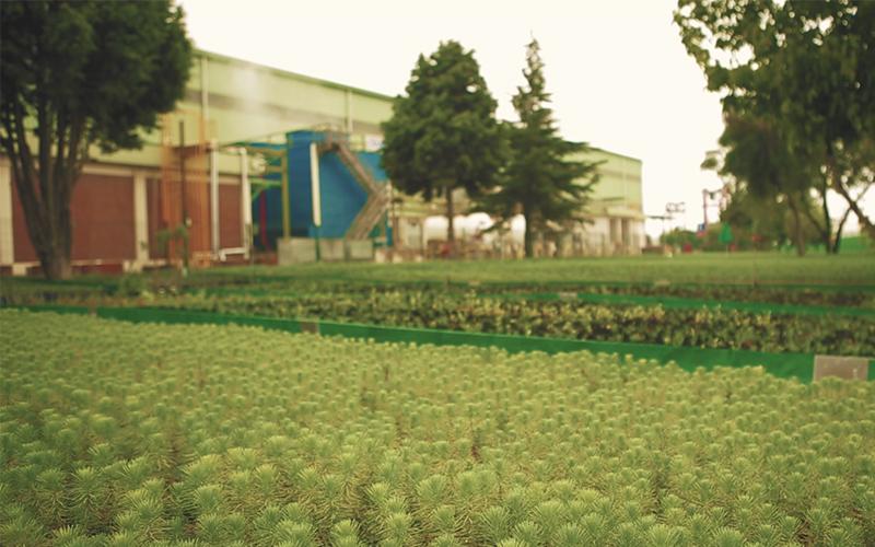 Borçelik 650 Bin Fidanı Doğa İle Buluşturdu